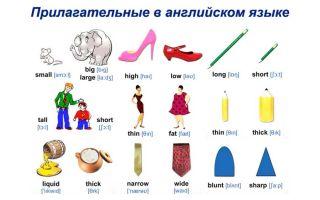 Прилагательные в английском языке: моменты теории и примеры популярных слов