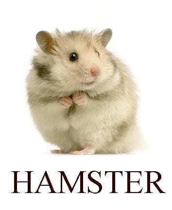 Какие звуки издают животные на английском? Карточки с картинками и озвучкой для распечатки