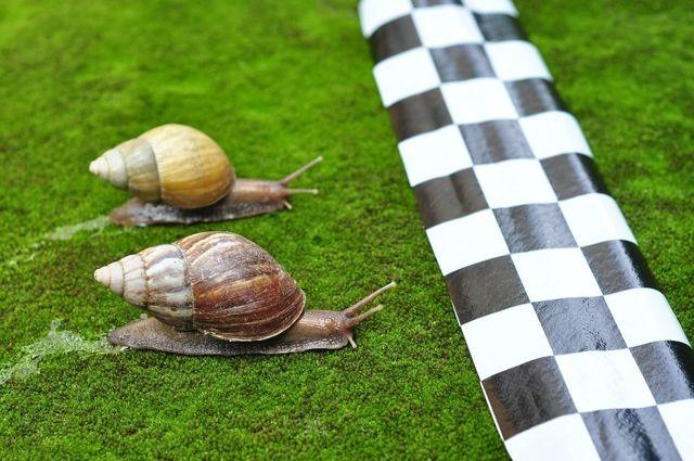 Английские идиомы, включающие НАЗВАНИЯ ЖИВОТНЫХ — idioms about animals (с переводом и озвучиванием)